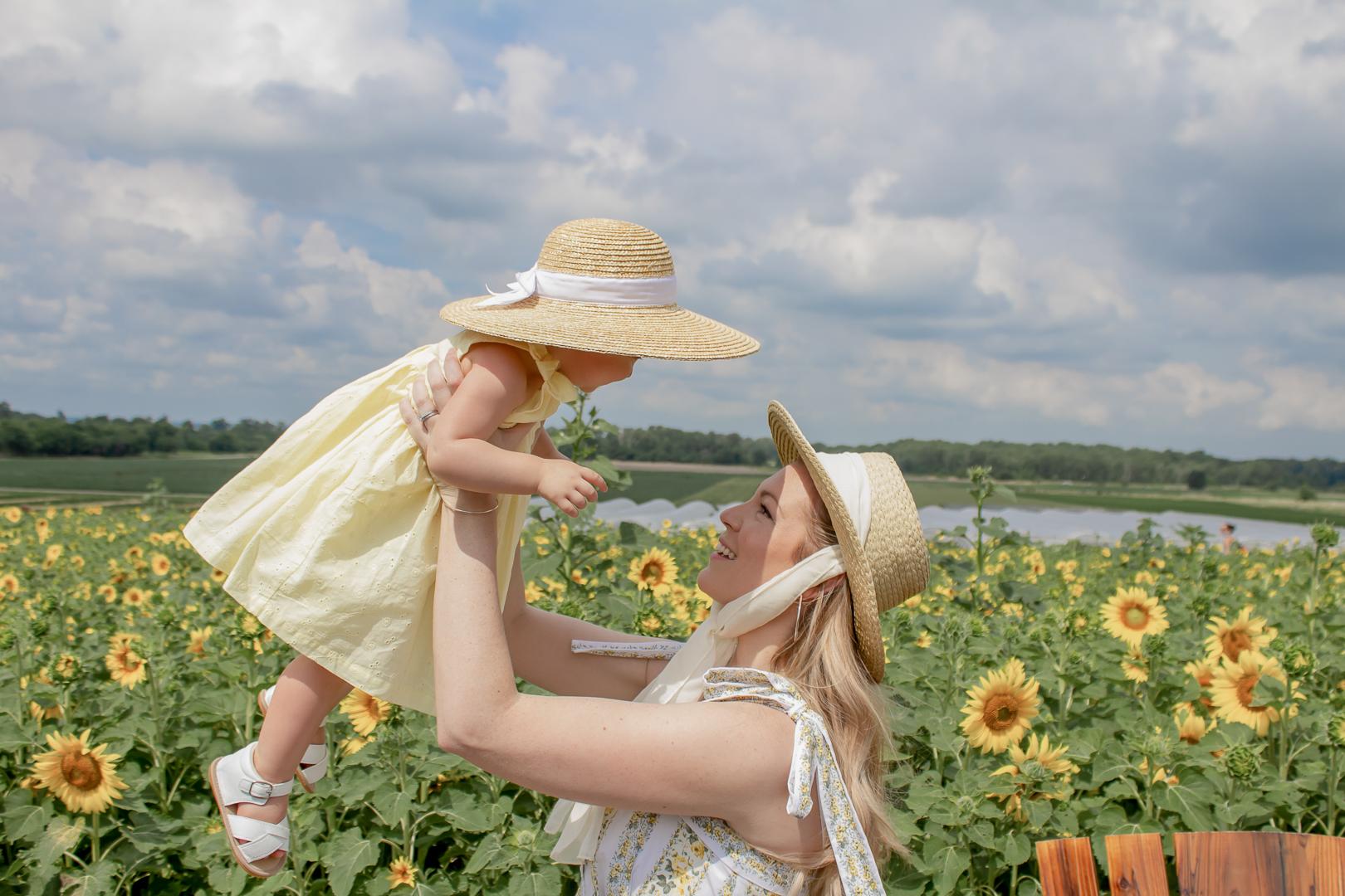 Sunflower Fields 15