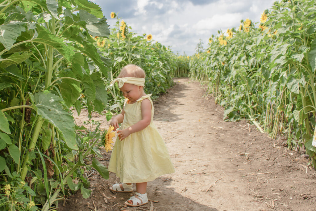 Sunflower Fields 9